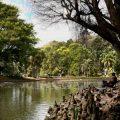 Prevenção contra febre amarela fecha Horto Florestal e Parque da Cantareira em SP