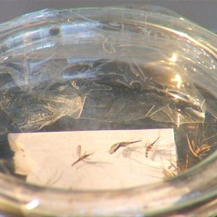 Após tendência de queda, casos de malária no mundo sobem em 2016, aponta OMS