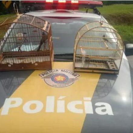 Motorista é flagrado com pássaros silvestres na rodovia Raposo Tavares