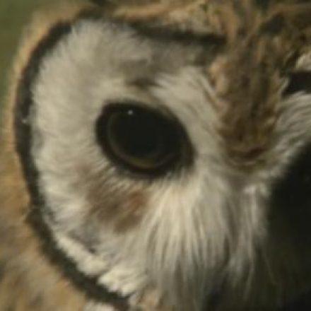 Zoológico de SP abre agendamento para passeios noturnos