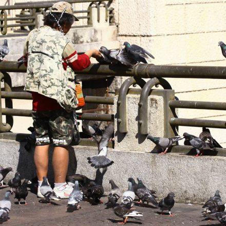 Fiscalização de Lei dos Pombos continua indefinida
