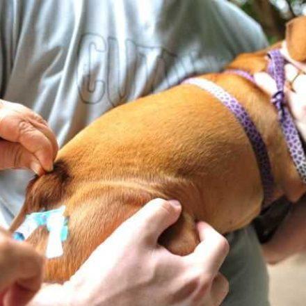 São Bernardo já imunizou 2.637 cães e gatos contra a raiva