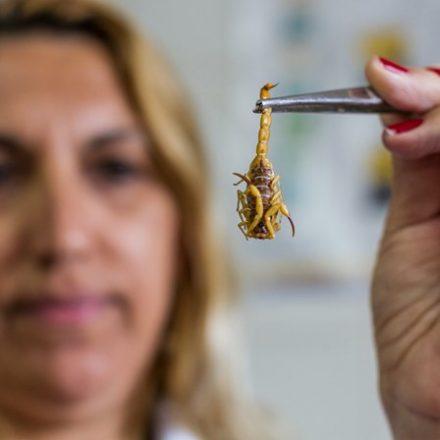 Casos de picadas de escorpião crescem 7,3% em São Paulo