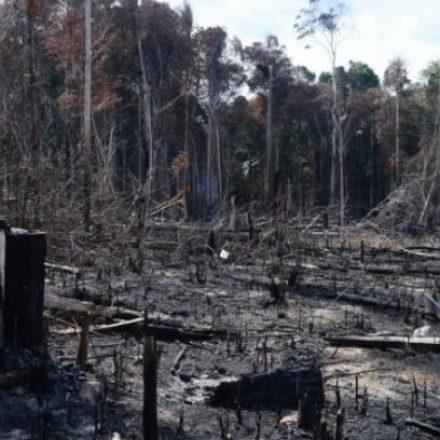 Brasil é o país com maior índice de desmatamento nos últimos 34 anos, diz estudo