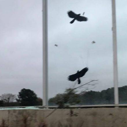 Muro de vidro da Raia Olímpica da USP amanhece quebrado – mais uma vez