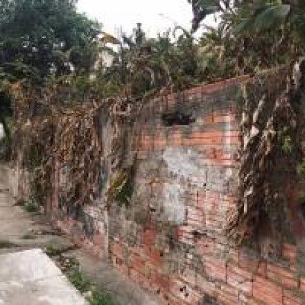 Moradores reclamam de proliferação de ratos em rua da Vila Formosa