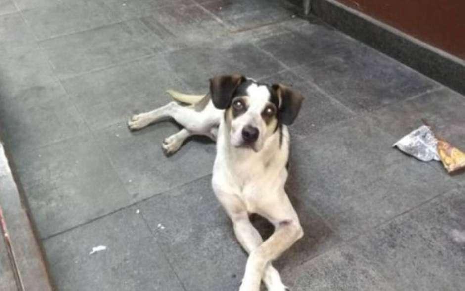 Inquérito apura morte de cachorro dentro de mercado
