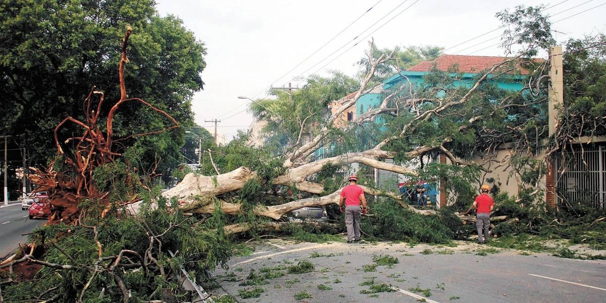 Problemas com árvores lideraram ranking de queixas na prefeitura de SP, em 2018