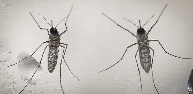 Casos de dengue sobem 29% em duas semanas; país registra 86 mortes pela doença
