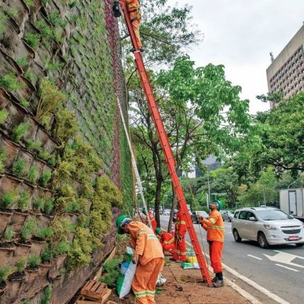 Jardins verticais são replantados na avenida 23 de Maio