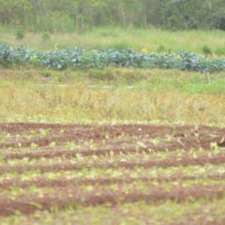 Chuva prejudica plantações e preço de hortaliças pode subir 30%