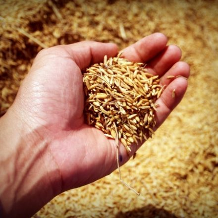 Gastos de famílias com arroz sobem