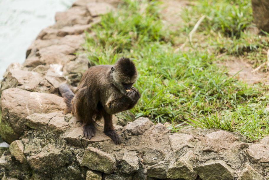 Veterinário chinês morre após ser infectado por vírus comum em macacos