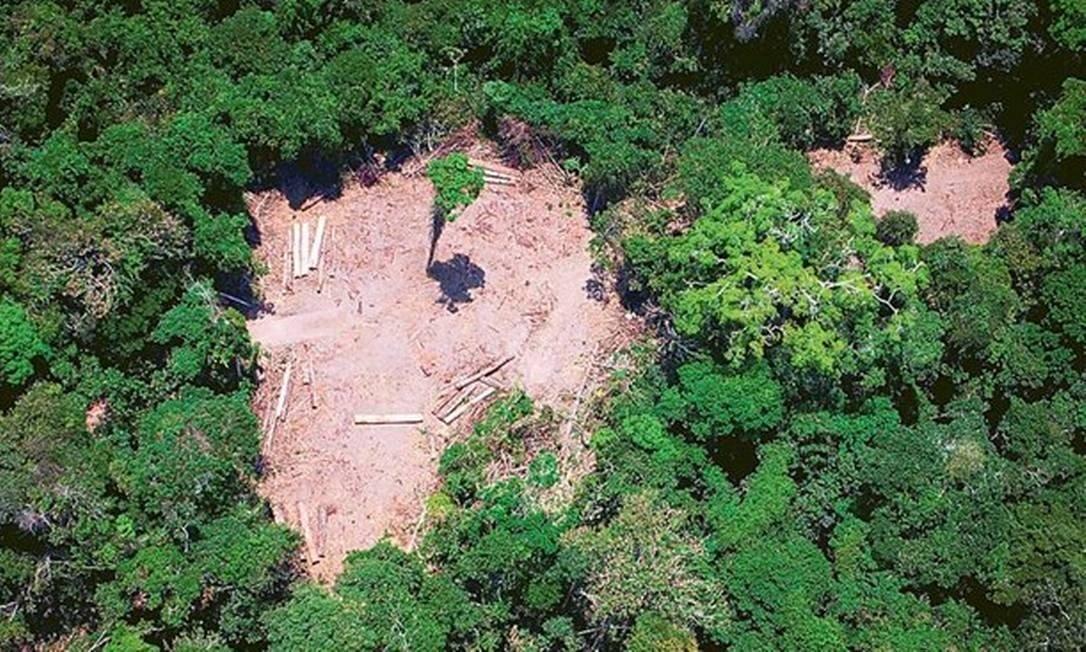 Alertas do Inpe sobre desmatamento na Amazônia crescem 278% em julho.