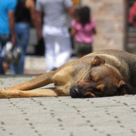 Senado votará projeto que pode proibir abate de animais de rua