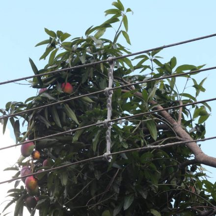 Procon notifica Enel após gari ser eletrocutado em árvore