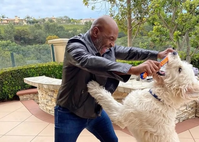 Mike Tyson diz que está treinando para voltar a lutar
